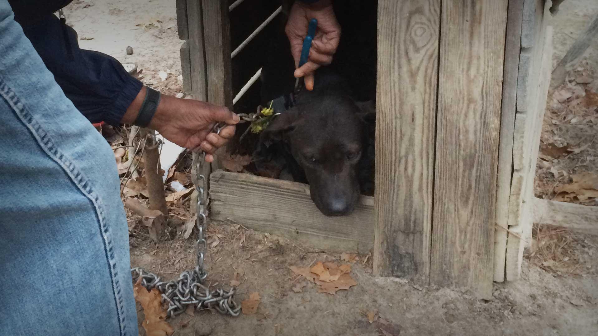 Peta Tötet Tiere