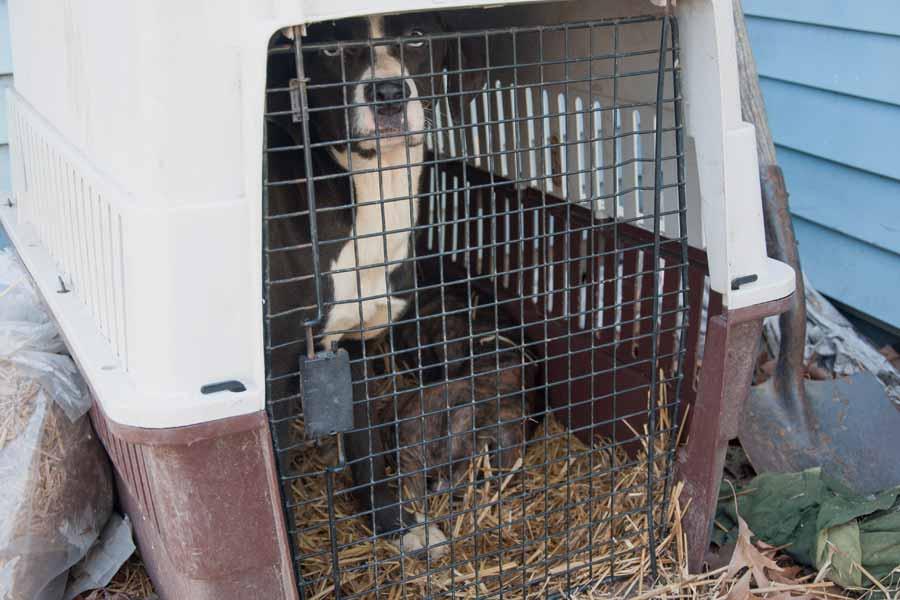 Die Warheit über - PETA Tötet Tiere -!